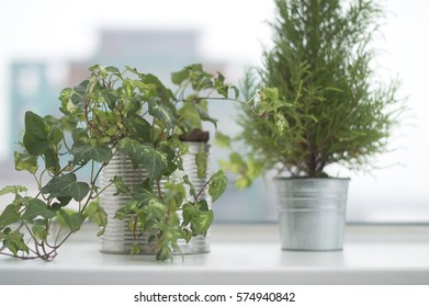 White and milky windowsill with a hedera and cypress in flower pots. Neat and fresh interior design. Distant city silhouettes in the background.