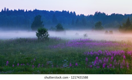 White mist in the meadow with blooming flowers of willow or fireweed in the early morning. Atmospheric summer northern landscape. Selective focus.