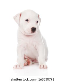 white mixed breed puppy. isolated on white background