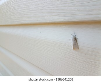 white moth insect with wings on white house siding