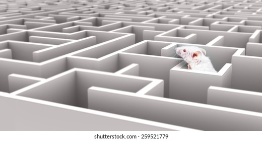 Image result for rats in a maze