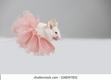 The white mouse is a rat dressed in a lush pink skirt and crown.Princess Creative Concept.2020 year of the rat, mouse. Happy New Year 2020 Greeting Card