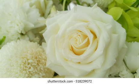 White nature flowers background
