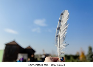 White northern owl feather in hand