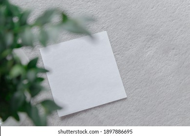 White note on a gray background with green branches. Eucalyptus. Postcard. Place for an inscription. Advertising. Ofi. Reminder.