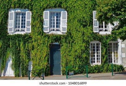 White old house covered with leaves of wild grapes