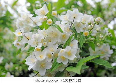 white orange flowers