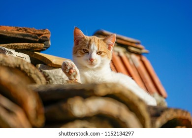 A white and orange kitten looking into the camera from top of the tile roof in Berat in Albania. The cat is holding its paw as if it is saying hello.