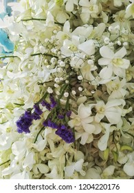 White Orchid Background.