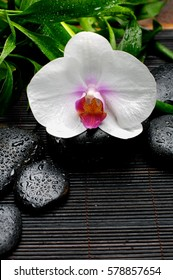 White orchid and bamboo leaf with wet stones on mat background