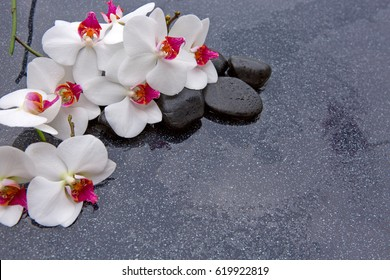 White orchid and basalt stones on the black background.