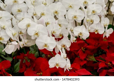 White orchid blossom, Flower decorate