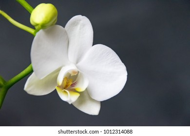 White orchid close-up on a black background
