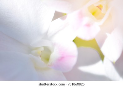 White Orchid flower background, Elemnt of design,select focus