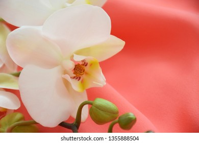 White orchid flower closeup on coral textile background with copy space. Color trend of the year 2019: Living Coral. Fashionable trendy color of spring-summer 2019 season.