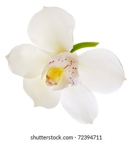 White orchid flower head close up isolated on white background