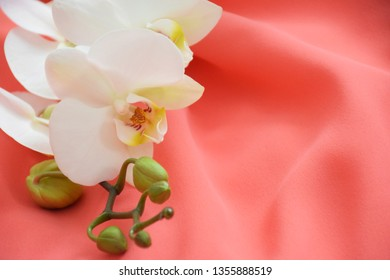 White orchid flower on coral textile background. Beautiful white orchid on a coral background. Color trend of the year 2019: Living Coral. Fashionable trendy color of spring-summer 2019 season.