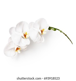 White orchid flowers and buds isolated on white background clipping path included. Flower composition.Top view, flat lay