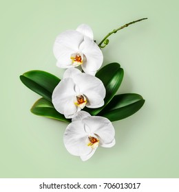White orchid flowers and leaves isolated on green background clipping path included. Flower arrangement. Floral design. Top view, flat lay