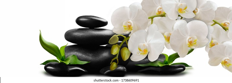 White Orchid flowers on black stones