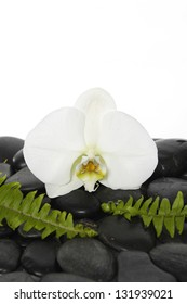 white orchid with green fern on pebbles