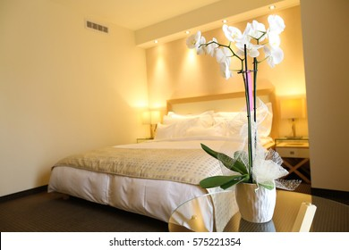 White orchid in hotel room