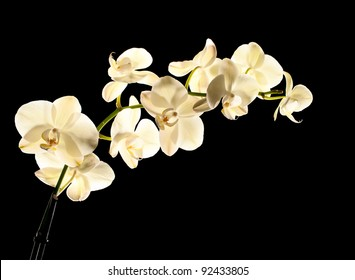 White orchid isolated on black  background.
