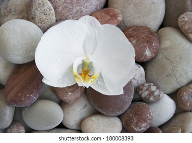 White orchid on a beach stones - nature background