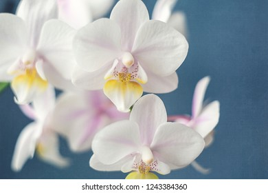 White Orchid on Blue Background