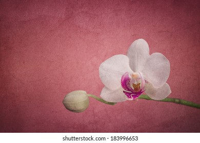 White orchid on a pink colored background with grungy texture
