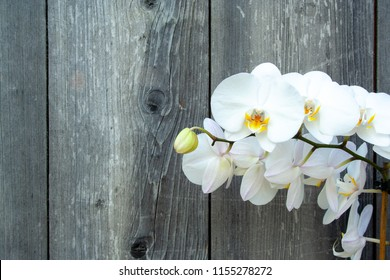 White orchid on wooden background with copyspace