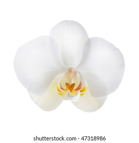 White Orchid over white
