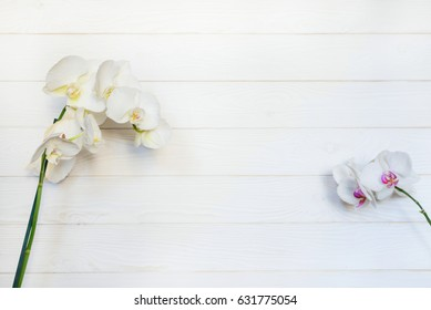 White orchid ( phalaenopsis flower) on white wooden background. Floral concept. Natural composition. Close up. Top view
