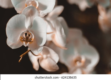 White Orchid with space for text and vintage colours. Beautiful white flowers arrangement with floral background.  Orchids are amazing flowers and also elegant.