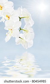 White Orchid, sun and water reflection in high key