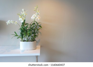 9f6db91945c4 White Orchid vase on the table with projection of down light from  ceiling,display table