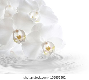 white orchidea with watercurls.