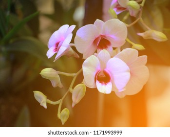 White orchids in a beautiful garden.