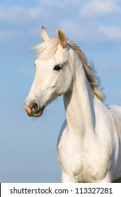 White Orlov trotter horse portrait on the sky background, vertical
