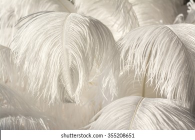 white ostrich feather background,gatsby concept,wedding concept
