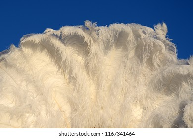 A white ostrich feather fan stands against a blue sky