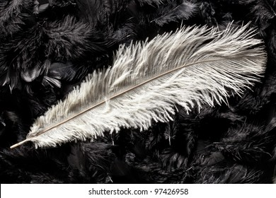 white ostrich feather on black