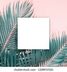 White papar blank brochure mock-up isolated white Background tropical palm leaves Flat lay top view Banner Toned pink turquoise trend colors