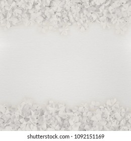 white paper background with flower frames, stipe pattern texture