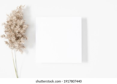White paper empty blank, dried grass decoration on white background. White square Invitation card mockup on white table. Flat lay, top view, copy space, mockup