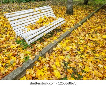 White park bench surrounded by yellow autumn leaves
