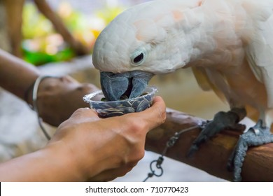 White parrot eating seeds