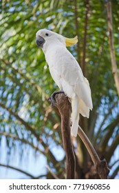 White parrot sets on the branch, Vietnam garden, tropical bird, fauna.