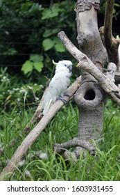 White parrot in Tokiy zoo, Japan