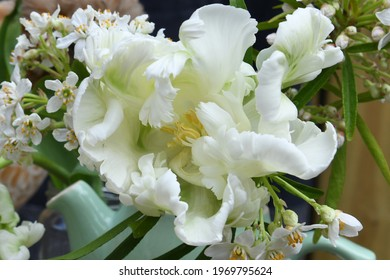 White parrot tulip close up in a green jug